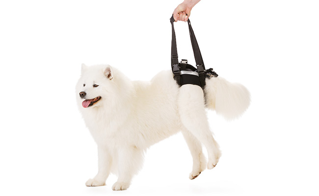 Rear Harness for Pets